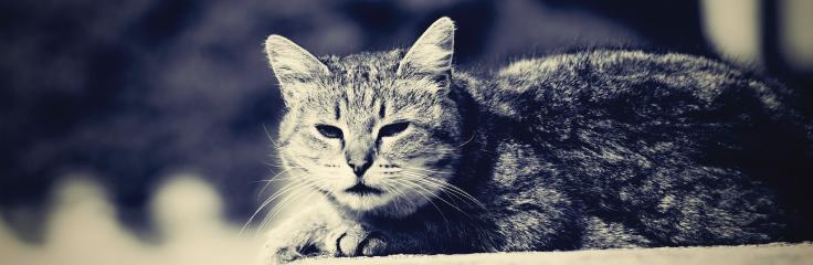 L'euthanasie des chiens et des chats
