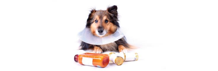 Les intoxications chez les animaux de compagnie