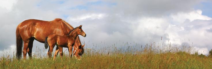Le contrôle parasitaire chez les chevaux