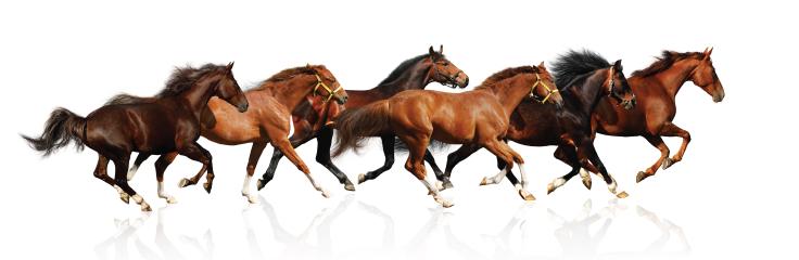La vaccination chez les chevaux