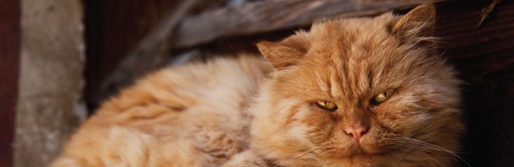 Mon chat vieillit…