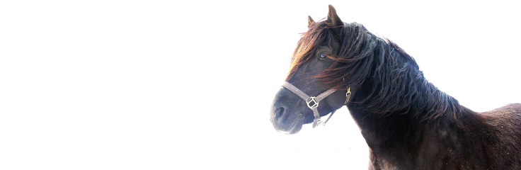 Le cheval gériatrique